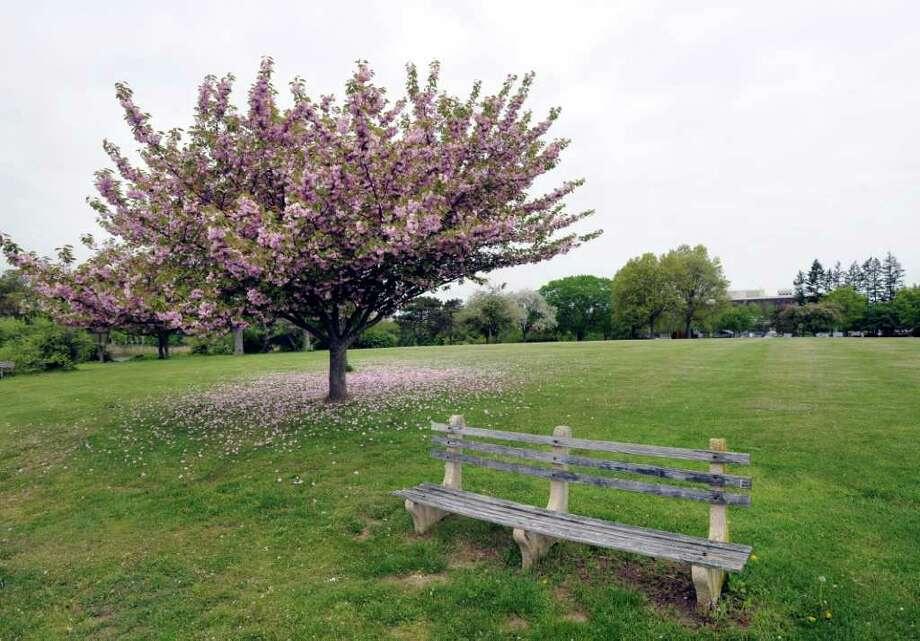 Roger Sherman Baldwin Park in Greenwich, shown in May. Photo: File Photo / Greenwich Time File Photo