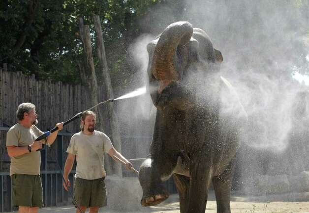 Budapest Zoo's Asiatic elephan Hella enjoys a spray of cold water as the temperature reached 100 degrees in Budapest, Hungary on Wednesday, Aug. 24, 2011. Photo: Bela Szandelszky/Associated Press