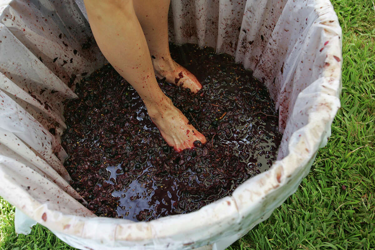 Grape stompers of all ages are invited to Becker Vineyards in Stonewall today and next weekend.
