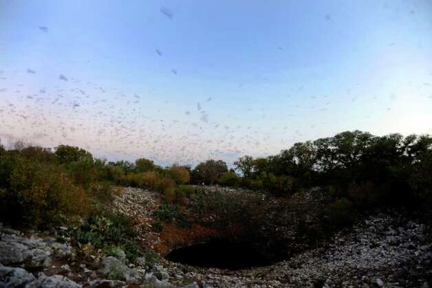 Bats fly into the night from the Bracken Bat Cave in Central Texas on Friday, Aug. 26, 2011. Bat Conservation International, which owns the cave and 697 acres around it, estimates that there are 20 million bats in this colony. Photo: BILLY CALZADA, BILLY CALZADA / Gcalzada@express-news.net / gcalzada@express-news.net