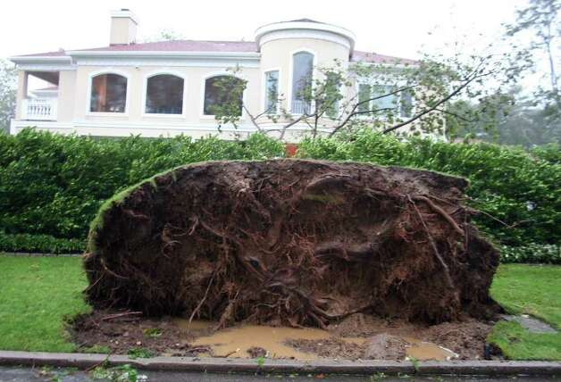 A tree near the tip of Shippan Avenue was uprooted by Hurricane Irene in Stamford, Conn. Sunday, Aug. 28, 2011. Photo: John Breunig