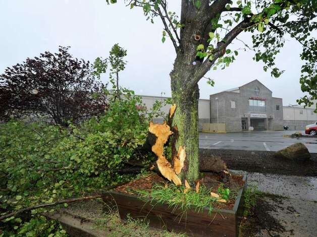 A storm-damaged tree in front of Stamford Twin Rinks on Hope Street, during Hurricane Irene, Sunday morning, Aug. 28, 2011. Photo: Bob Luckey / Greenwich Time