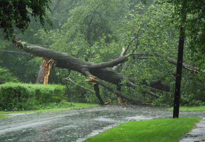 A large oak tree fell across Winnie Road, taking out utility lines in Delmar N.Y. Sunday morning Aug