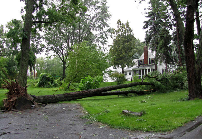 A tree is down on Maple Lane in Loudonville. (Photo by Phoebe Sheehan)