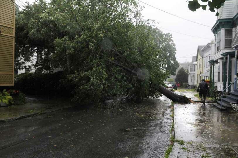 A large tree was toppled on North Ferry Street in the Stockade area as Irene hit the region on Sunda