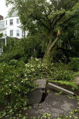 An uprooted tree along Fairview Avenue due to Hurricane Irene in Danbury on Sunday, Aug. 28, 2011. Photo: Jason Rearick / The News-Times