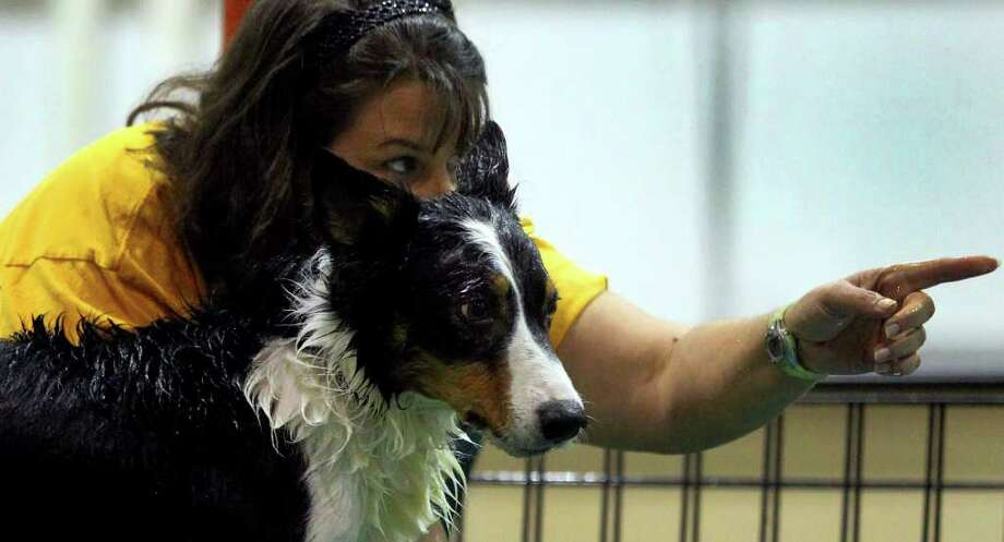 "Catherine Laria points before Paint, her border collie, takes a leap off the dock into the water to retrieve a decoy or ""bumper"" Sunday, Aug. 28, 2011, at the Freeman Coliseum Expo Hall during the Heart of Texas Dockdogs Texas Jump Off. Photo: John Davenport/jdavenport@express-news.net / jdavenport@express-news.net"