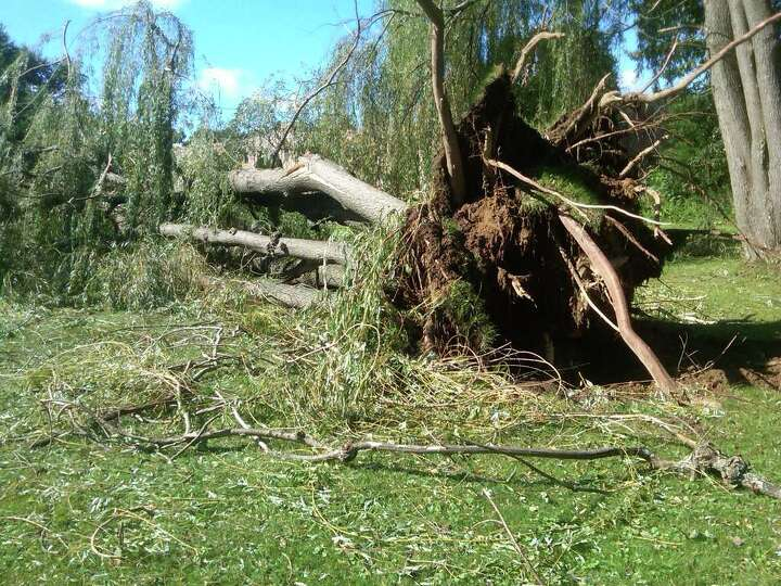 A tree is toppled near the Schenectady County's  Glendale Home on Monday, Aug. 28, 2011. (HANK DOMIN