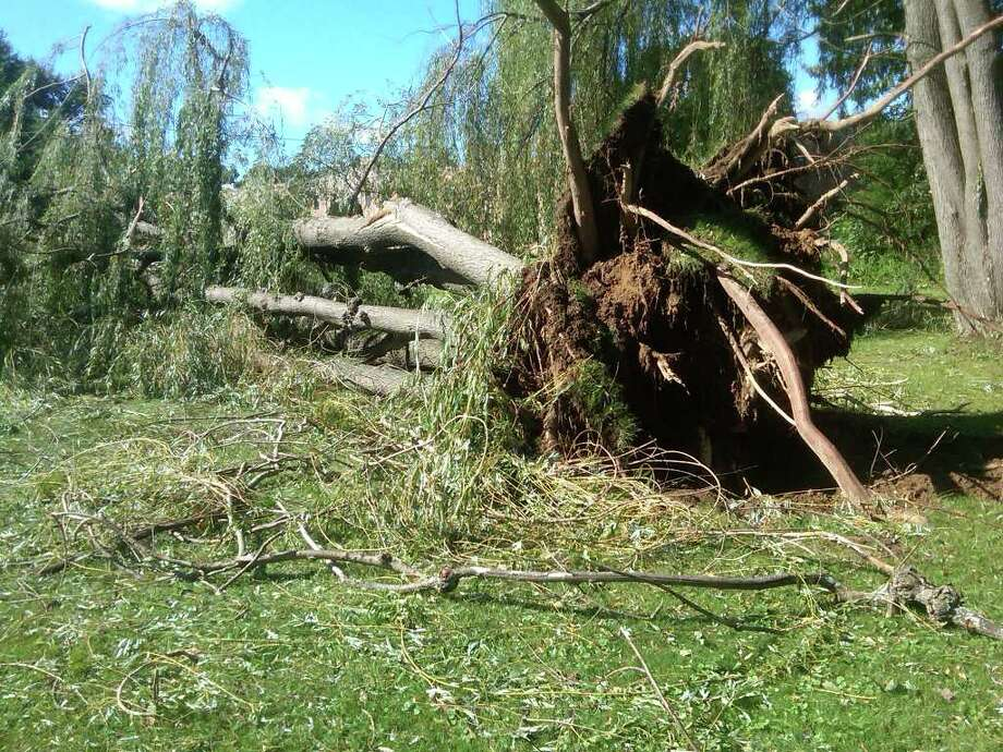 A tree is toppled near the Schenectady County's  Glendale Home on Monday, Aug. 28, 2011. (HANK DOMIN / TIMES UNION)