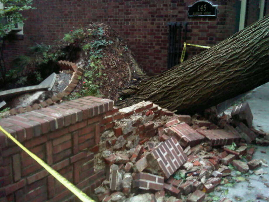 A tree is uprooted and falls across Hicks St. in Brooklyn Heights, N.Y. Photo: Rubie Edmondson