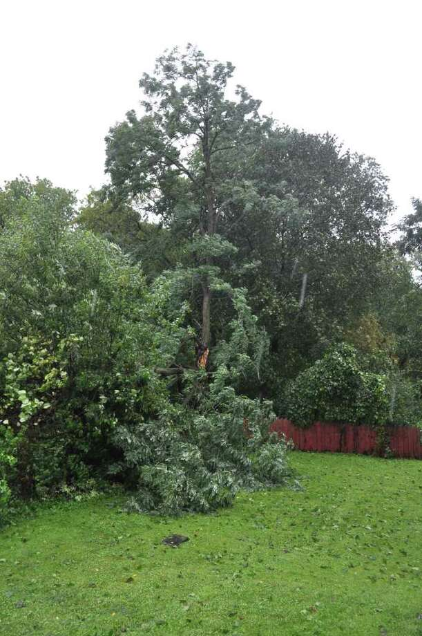 Part of a tree downed by Irene. Photo: .
