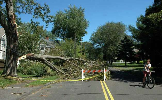 A downed tree on Judson Road in Fairfield, Conn. caught the attention of a young bike rider on Monday Aug. 29, 2011. Photo: Cathy Zuraw / Connecticut Post