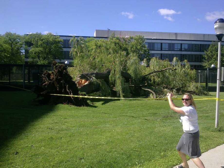 A downed willow tree at the NYS Office Campus, rear of state Taxation and Finance Building in Albany Photo: .