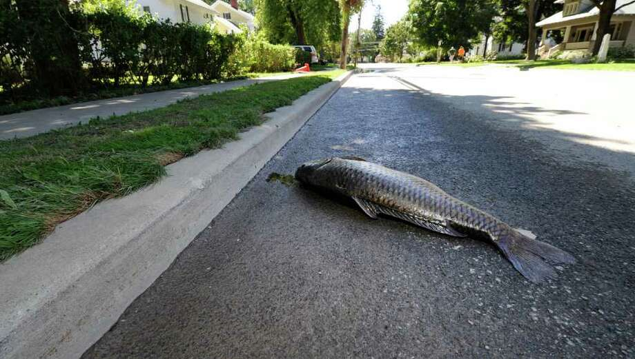 A large fish lies on Main Street in Schoharie, N.Y. after the flood hit the area  N.Y. Aug. 29, 2011.   (Skip Dickstein / Times Union) Photo: SKIP DICKSTEIN / 2011