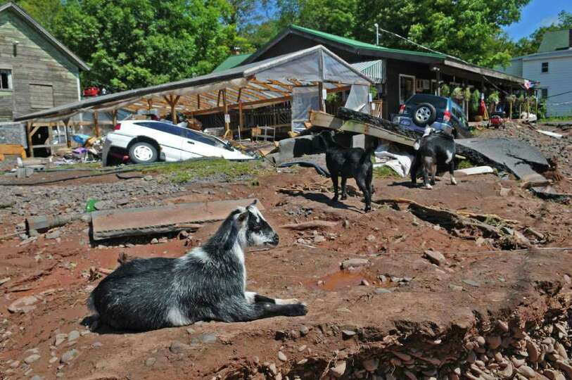 Goats sit outside of the Catskill Mountain Country Store, as cleanup from the damage caused by Hurri