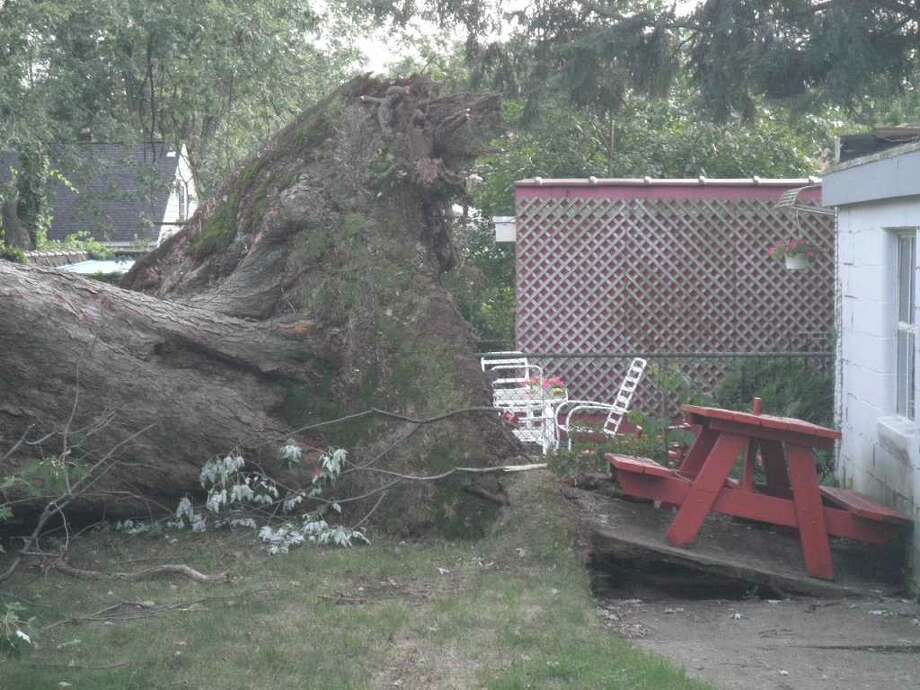 This tree fell out of my neighbor's yard and into ours. (Amy Krebs)