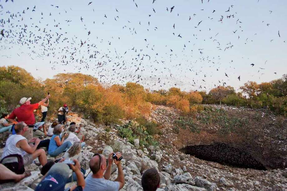 Spectators snap photos as thousands of Mexican free-tail bats fly overhead during Saturday's first-ever public Bracken Bat Cave viewing. Photo: Marvin Pfeiffer/Prime Time Newspapers