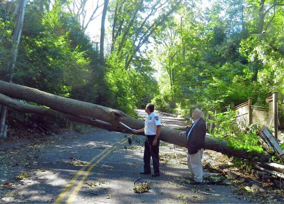 Fire Chief Andrew Kingsbury, left, and First Selectman Gordon Joseloff inspect a downed tree on Clinton Avenue on Tuesday, Aug. 30, 2011. Photo: Contributed Photo / Westport News