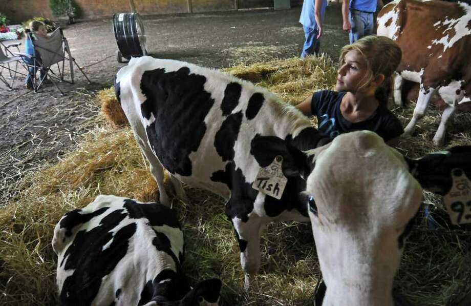 Kendall Kennedy of Fort Plain, 11, stays with her holstein Tish in the 4-H Cattle barn at the Montgomery County Agricultural Society's Fonda Fair just a few hours before the 5 pm start of the annual fair on Thursday Sept. 1, 2011,  in Fonda, NY. Many volunteers helped clean up the fairgrounds from the flood damage inflicted by Tropical Storm Irene. The fair was shortened by two days due to the storm. A fan is behind her at left, helping to dry out the barn and to keep the occupants cool.  (Philip Kamrass / Times Union) Photo: Philip Kamrass / 10014488A