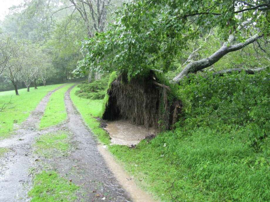 "User-submitted photo of damage from Hurricane Irene.  Submitted by Chris ""Uprooted tree in driveway"" Photo: Contributed"
