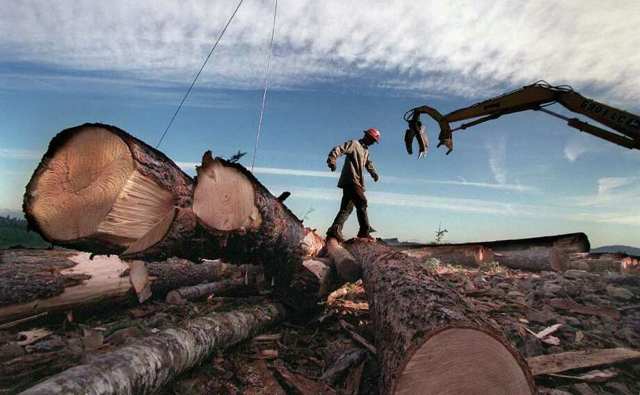 Gyppo: A self-employed logger. Photo: PAUL JOSEPH BROWN