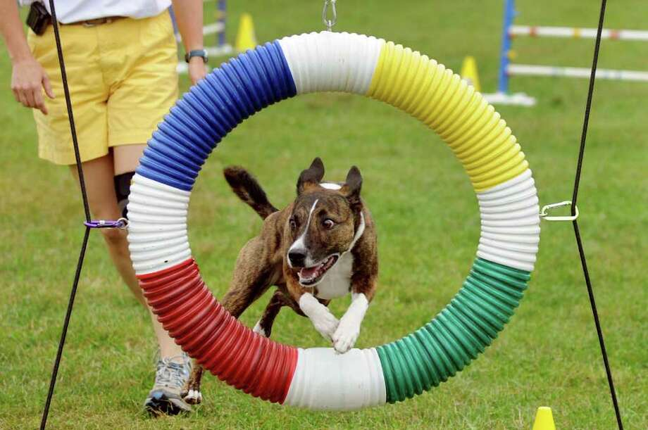 Bubba, a border collie and Staffordshire terrier mix, runs through the agility course with her owner Judy Raffon of Bennington, Vt. during the Scottish Games on Saturday, Sept. 3, 2011, at Altamont Fairgrounds in Altamont, N.Y. (Cindy Schultz / Times Union) Photo: Cindy Schultz