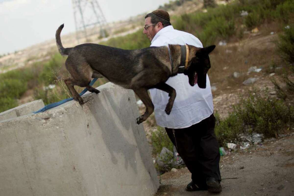 In this Aug. 30, 2011 photo, Israeli Mike Guzafsky, 47, a settler who trains guard and attack dogs for settlements, performs a training exercise with a dog in the West Bank settlement of Elazar, near Jerusalem. Israeli soldiers, policemen and West Bank settlers are rehearsing for a new kind of possible unrest this month when Palestinians plan to hold mass demonstrations supporting their bid to win recognition of an independent state at the United Nations. (AP Photo/Bernat Armangue)