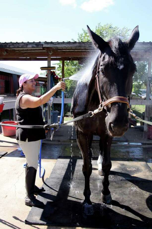 SUZANNE REHAK: FOR THE CHRONICLE KEEPING COOL: Barbara Jacobs, owner of Blue Ribbon Meadows, sprays Ruben, her Hanoverian horse. Photo: Suzanne Rehak, Freelance Photographer
