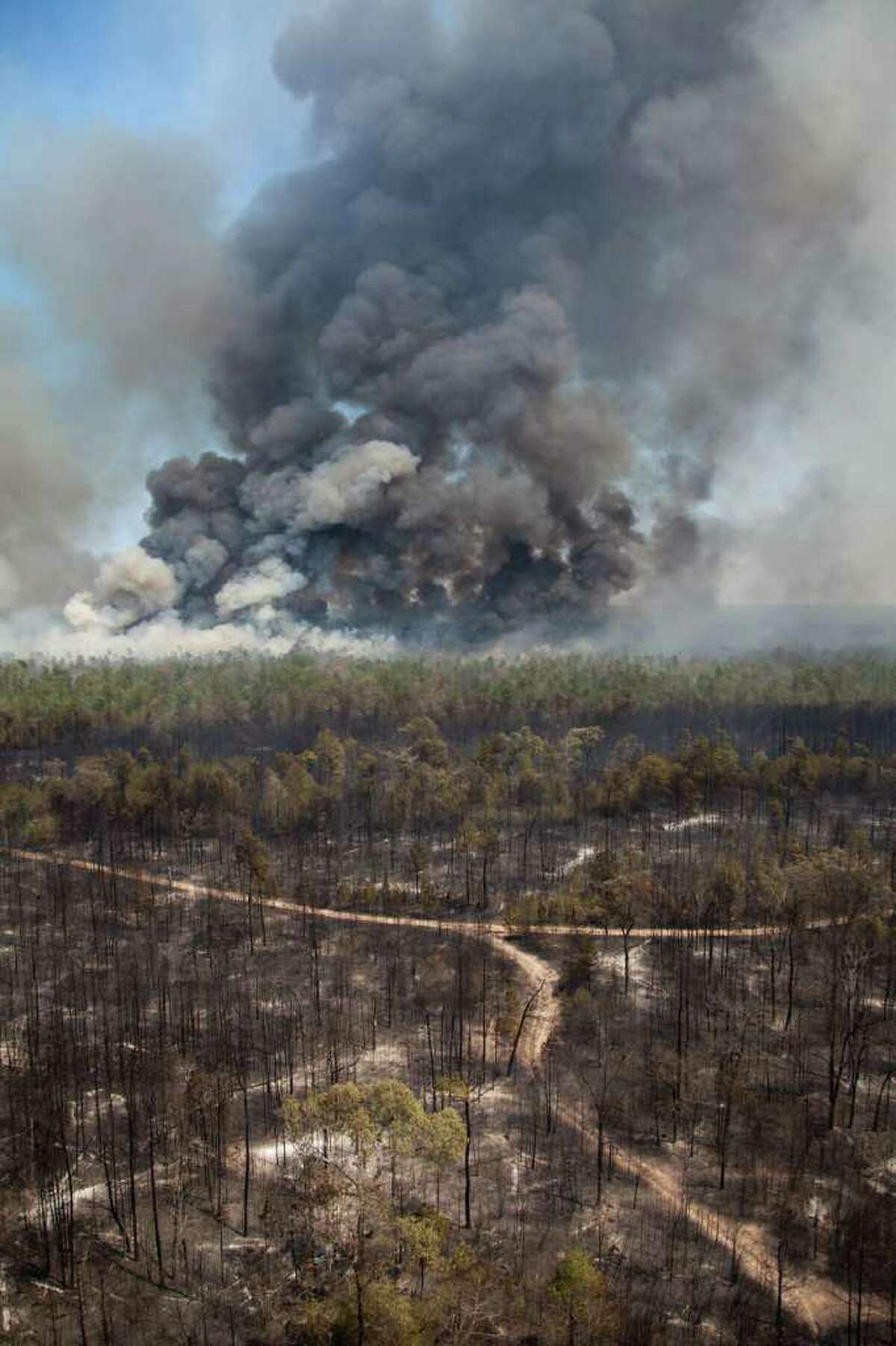 Blackened forest is left behind as large wildfire burns on Tuesday, Sept. 6, 2011, near Magnolia, Texas. A large blaze burning in forests in Montgomery, Waller and Grimes counties north and west of Houston contributed to more than 1,000 homes that have been destroyed in at least 57 Texas fires. ( Smiley N. Pool / Houston Chronicle )