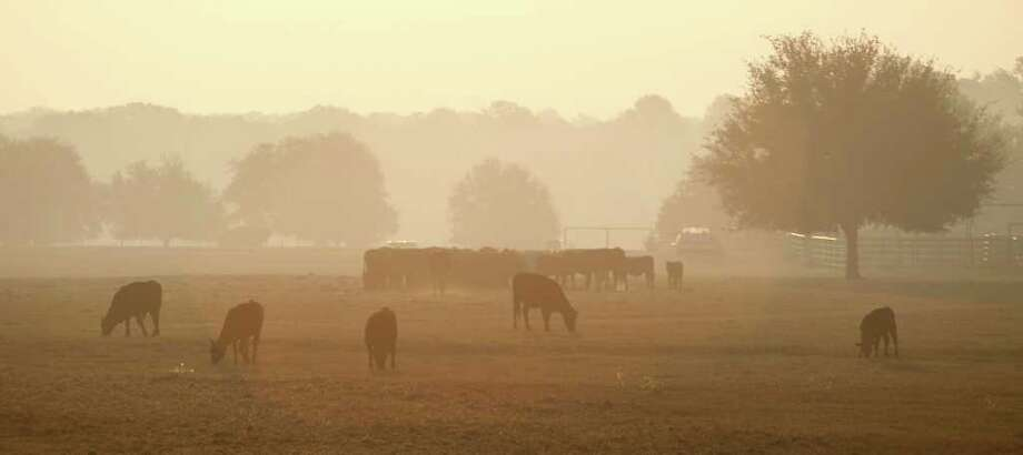 Smoke from a wildfire hangs over a field of cattle, Wednesday, Sept. 7, 2011, in Bastrop, Texas. Wildfires have destroyed more than 600 homes and blackened about 45 square miles in and around Bastrop. A search team on Wednesday will begin looking for more possible victims of the fire, which has killed two people and forced thousands to evacuate. (AP Photo/Eric Gay) Photo: Eric Gay, STF / AP