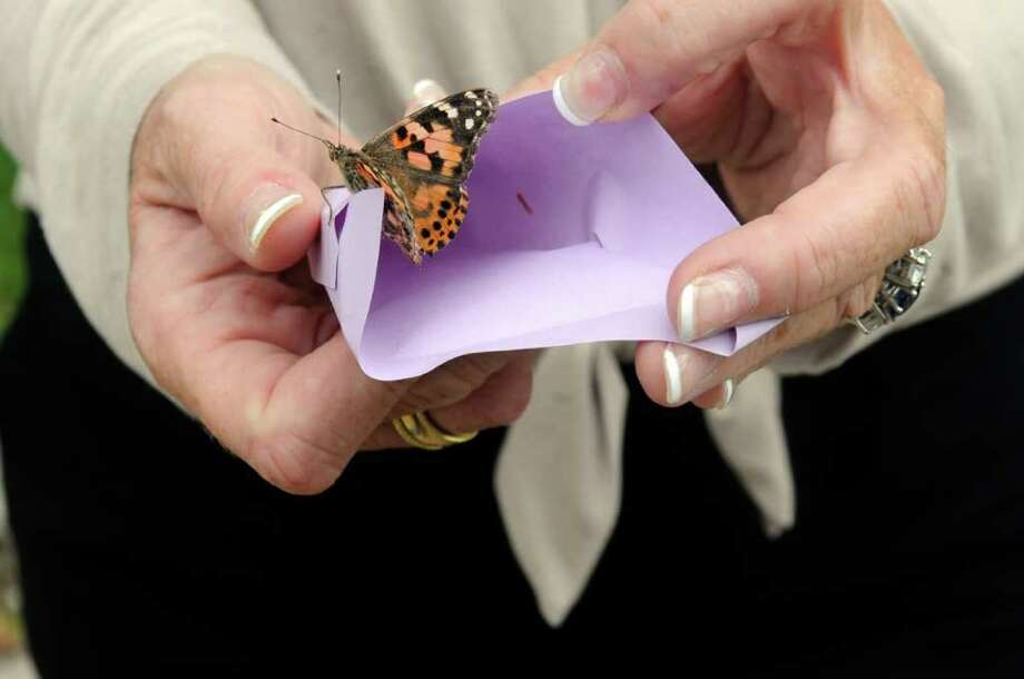 Cathy Ragone of Vitas Innovative Hospice Care in Stratford holds a butterfly on Thursday, Sept. 8, 2011, during a butterfly release in tribute to the victims of 9/11 at Greenwich Senior Center. Vitas provided the butterfly. Photo: Helen Neafsey / Greenwich Time