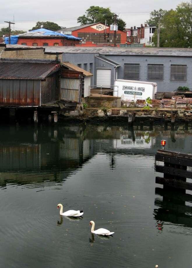 A pair of mute swans have taken up residence on the Pequonnock River under Bridgeport's decrepit Congress Street Bridge. Photo: John Burgeson / Connecticut Post