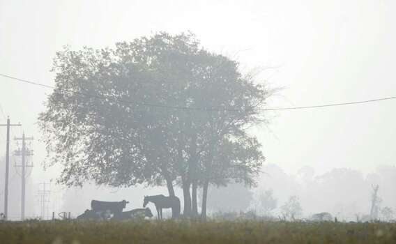 A horse and other livestock graze as smoke from the wildfires engulfs the area on FM 149 near Magnolia Saturday morning. (Eric Christian Smith / For the Chronicle) Photo: Eric Christian Smith, For The Chronicle