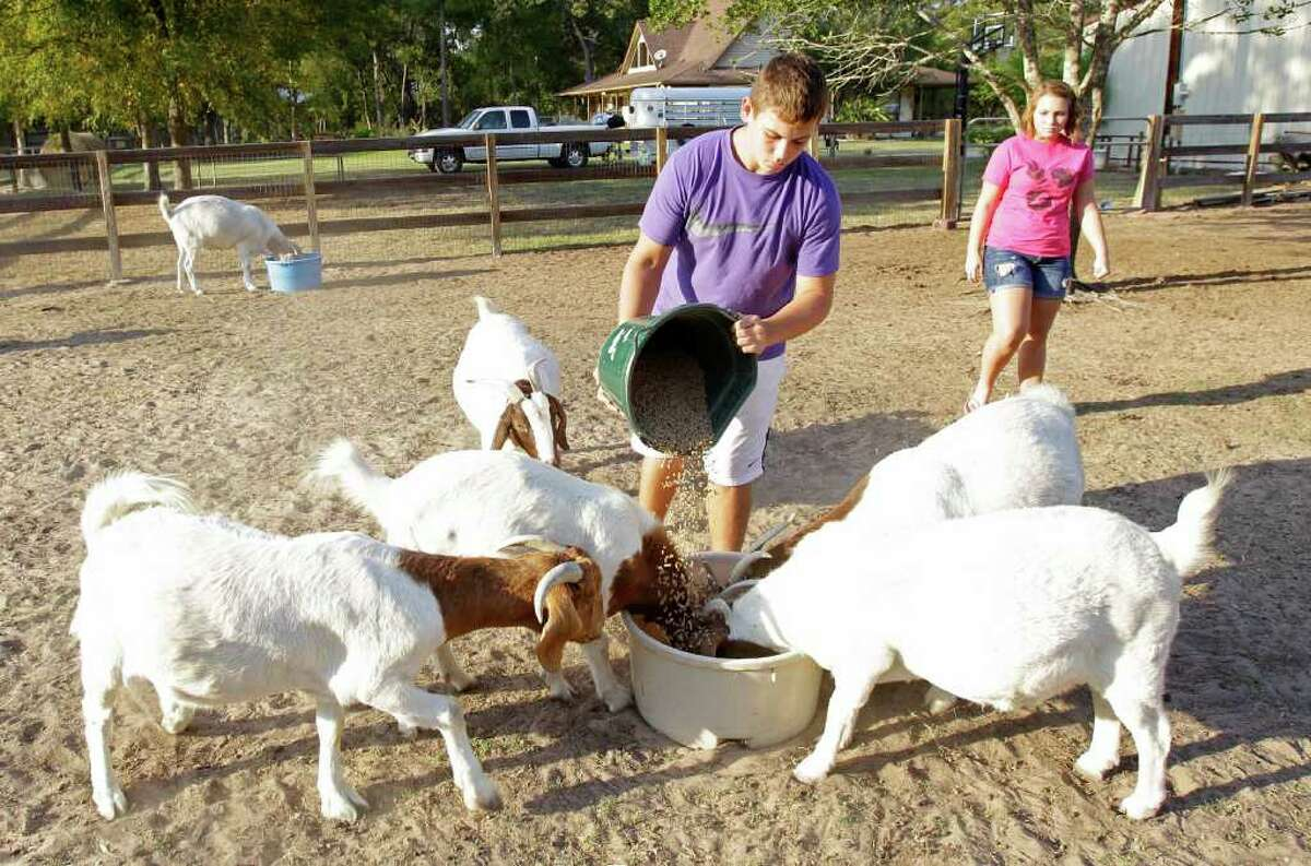 Brody Burrus, 14, and his sister, Hannah, 13, feed goats after their family return to their Forest Hills Estates home in Waller.
