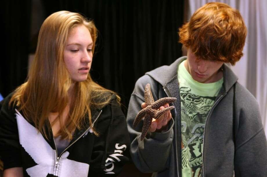 Bridgeport Aquaculture School seniors, Kendra Miller of Shelton, left, and Mathewe (Sic) Schofield of Milford, inspect a sea star at the NOAA Fisheries Lab open house on Friday, Oct. 16, 2009. The lab will be open to the public on Saturday. Photo: B.K. Angeletti / Connecticut Post