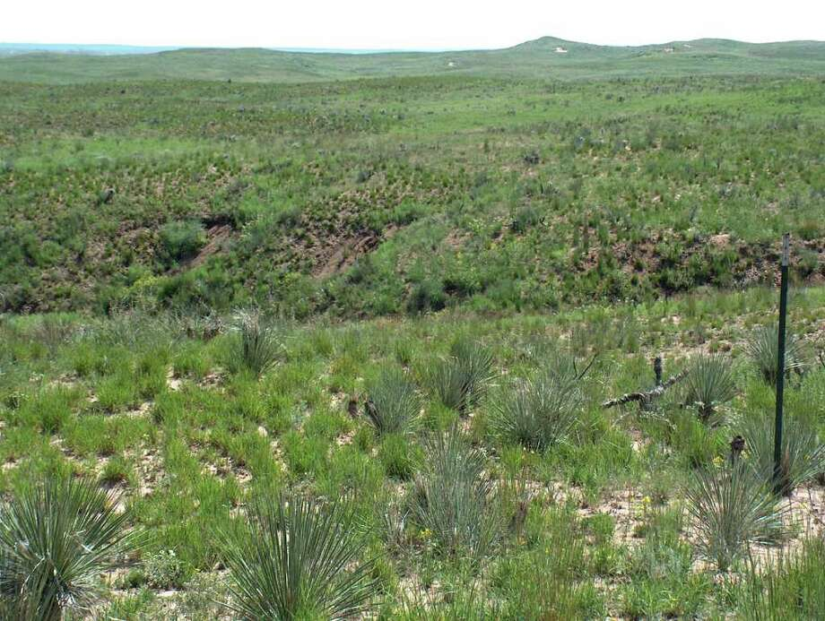 Five months and a couple of good rains after being turned into a moonscape by a wildfire, an area of Hutchinson County in the Texas Panhandle shows how quickly nature can recover from fire's effects. Photo: Jeff Bonner, TPWD