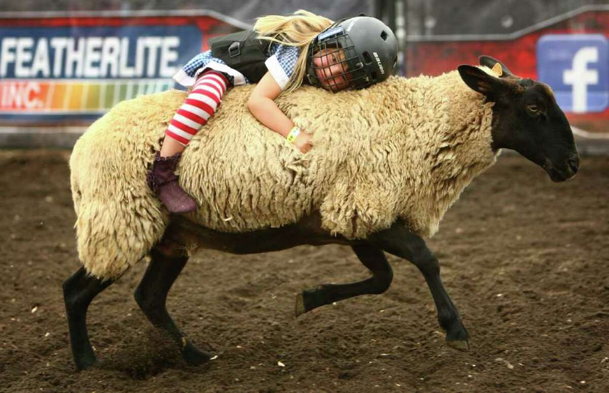 TeaRenee Peregrine, 3 1/2, holds on tight during the Wool Riders Only mutton busting competition at the Puyallup Fair on Wednesday, September 14, 2011 in Puyallup. Peregrine came in second during the competition after holding onto the sheep for 5.7 seconds. Kids age three to six and under 60 pounds must hold onto a sheep with their hands for six seconds during the competition. The ride proves difficult -and thrilling- as most riders do not make it to six seconds.The annual fair continues through September 25th.