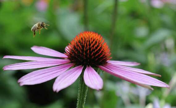 honey bees flowers relationship counseling