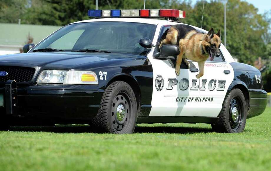 Milford Police K9 Judge leaps through the window of his partner Matt Lima's cruiser Friday, Sept. 16, 2011, at Washington Field in Milford. Photo: Autumn Driscoll