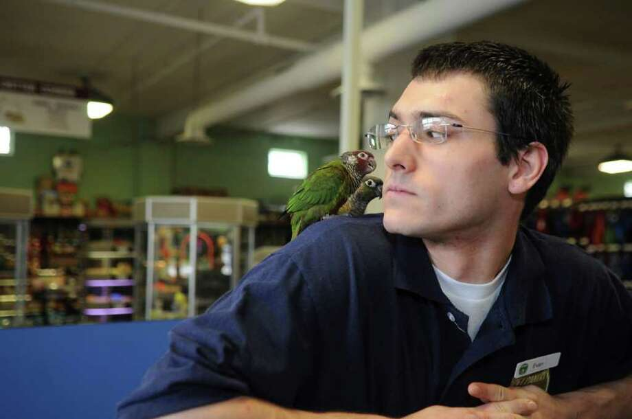 At Pet Pantry In Greenwich Evan Paretti Carries Two Conure Parakeets On His Shoulder While