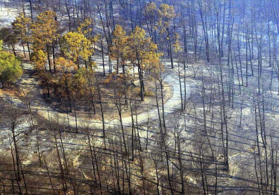 This photo provided by Texas Parks and Wildlife shows the destruction from the wildfire in Bastrop  State Park. It also scorched the heart of the Lost Pines ecological area, as well as the endangered Houston toad's main habitat. Photo: Chase A. Fountain / TEXAS PARKS AND WILDLIFE