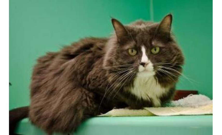 Name: Kitty, Breed: