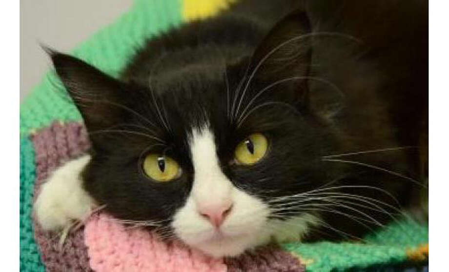 Name:Dorothy, Breed: