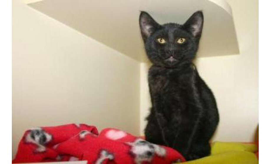 Name: Shimmy, Breed: