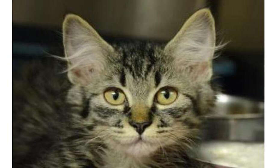 Name:Star, Breed: