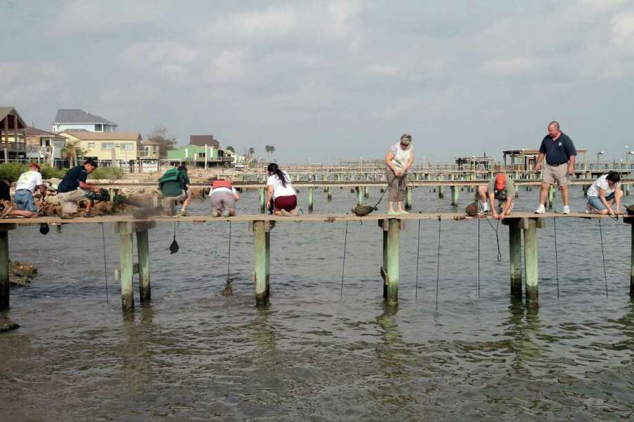 PIN LIM PHOTOS: FOR THE CHRONICLE LABOR OF LOVE: Residents in San Leon removed oyster gardening bags from their piers and placed the live, gardened oysters on several adjacent constructed reef pads in an effort to expedite colonization by oysters. Photo: Pin Lim / Copyright Pin Lim.