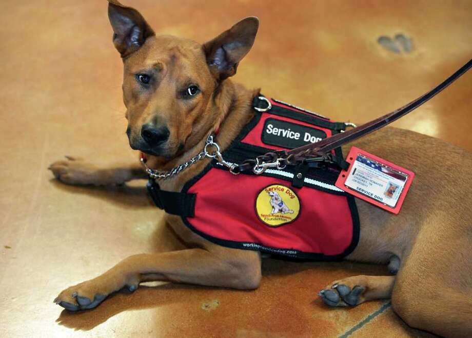 Gunny, who was rescued from a kill shelter, comes from the Train a Dog -- Save a Warrior program of the Penny's From heaven Foundation. BOB OWEN / EXPRESS-NEWS Photo: BOB OWEN, SAN ANTONIO EXPRESS-NEWS / rowen@express-news.net