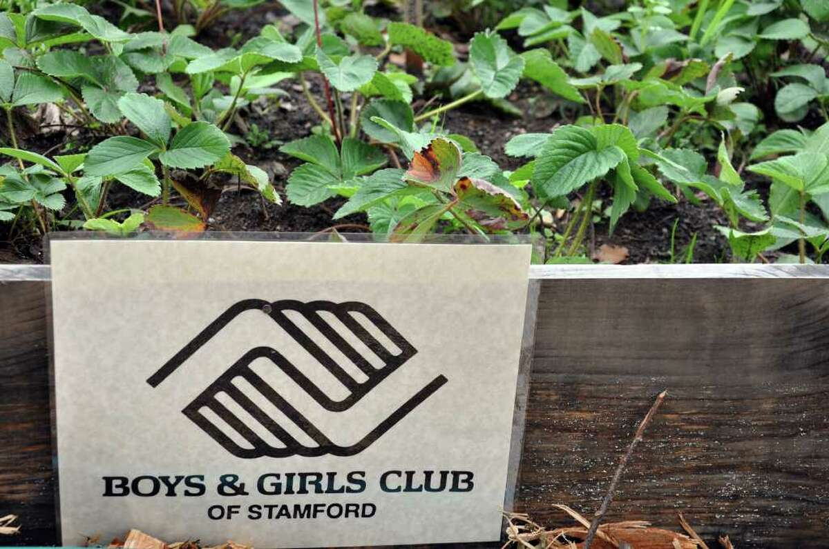 A Boys and Girls Club sign marks a row of strawberry plants at Fairgate Farm during the Harvest Festival at the farm on Stillwater Avenue in Stamford on Saturday, Sept. 24, 2011.