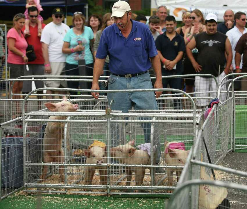 Pigs are ready for a race at the 4th Annual Blues, Views & BBQ Festival at the Westport Library on Sunday, September 25, 2011.
