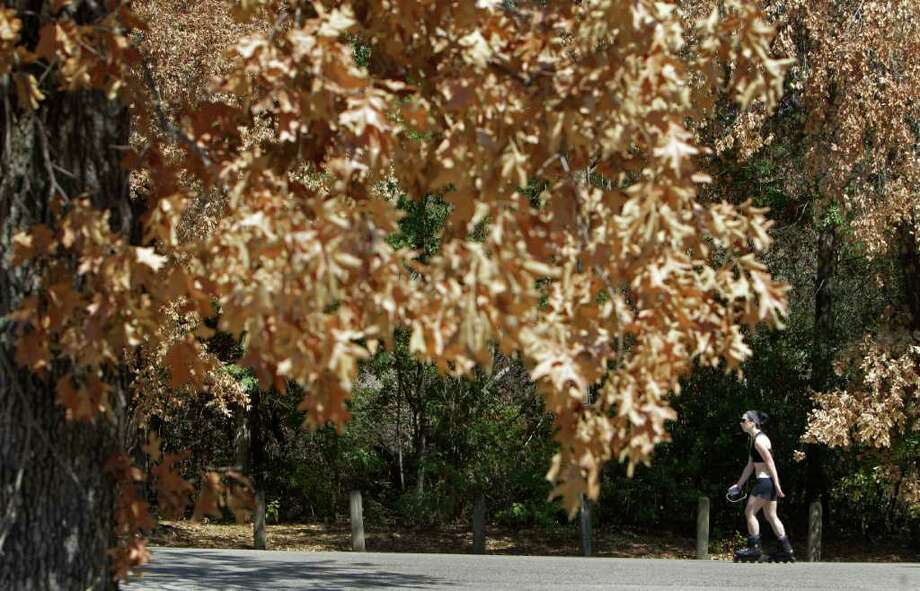 BIG JOB: A rollerblader cruises past dead trees in Memorial Park. Parks and Recreation must spend 13 times more than in a normal year for the cleanup. Photo: Melissa Phillip / © 2011 Houston Chronicle